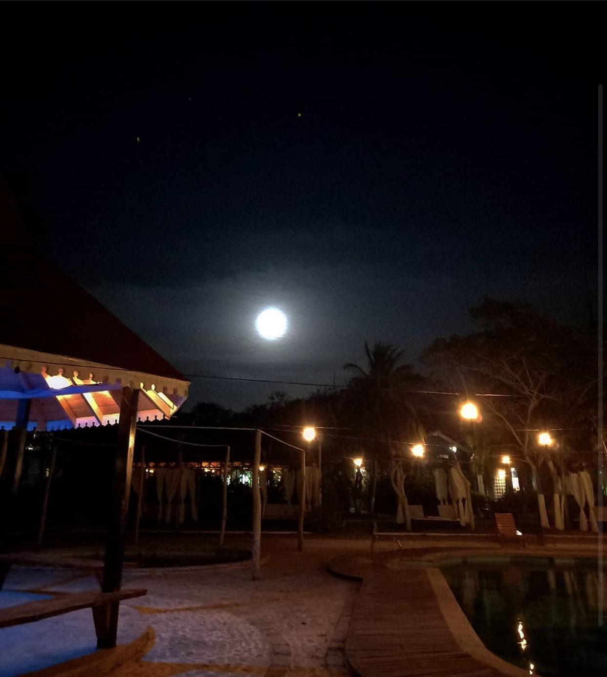 Noche de Plancton
